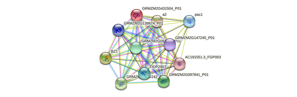 GRMZM2G431504_P01 protein (Zea mays) - STRING interaction network