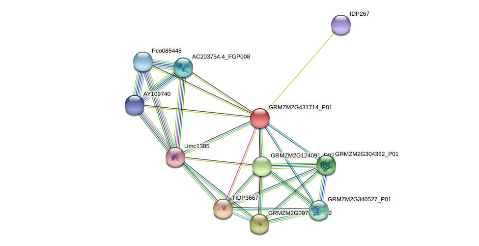 GRMZM2G431714_P01 protein (Zea mays) - STRING interaction network