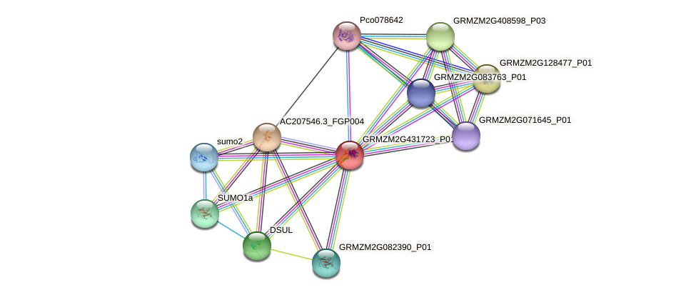 GRMZM2G431723_P01 protein (Zea mays) - STRING interaction network