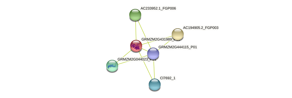 GRMZM2G431989_P01 protein (Zea mays) - STRING interaction network