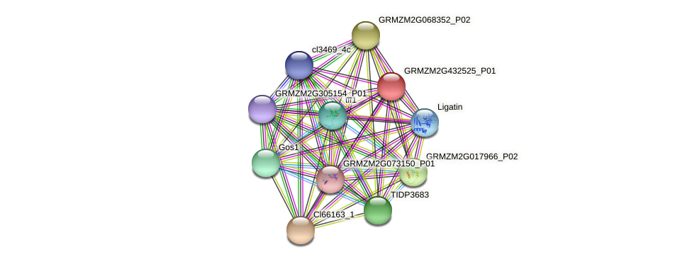 GRMZM2G432525_P01 protein (Zea mays) - STRING interaction network