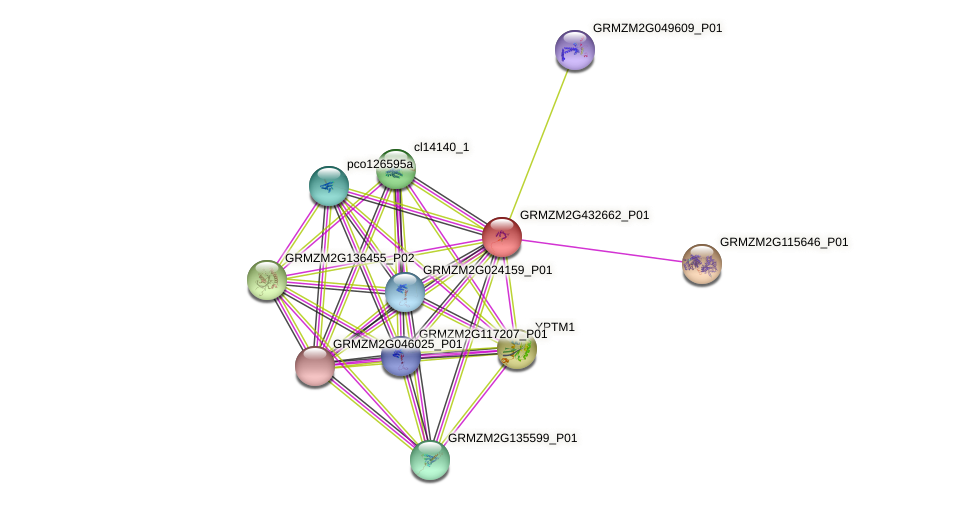 GRMZM2G432662_P01 protein (Zea mays) - STRING interaction network