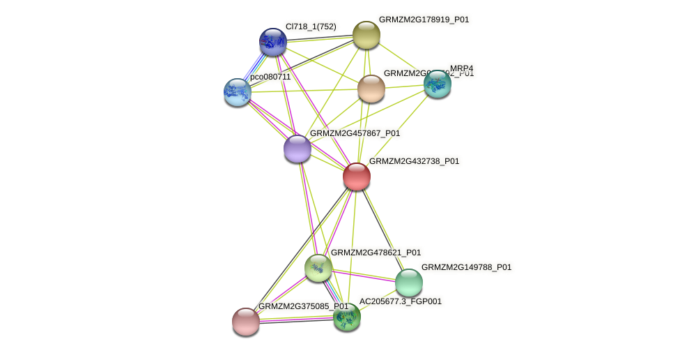 GRMZM2G432738_P01 protein (Zea mays) - STRING interaction network