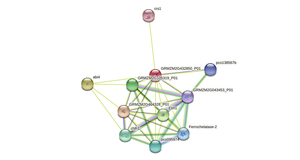 Zm.93779 protein (Zea mays) - STRING interaction network