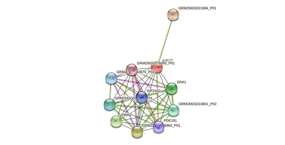 GRMZM2G433025_P01 protein (Zea mays) - STRING interaction network