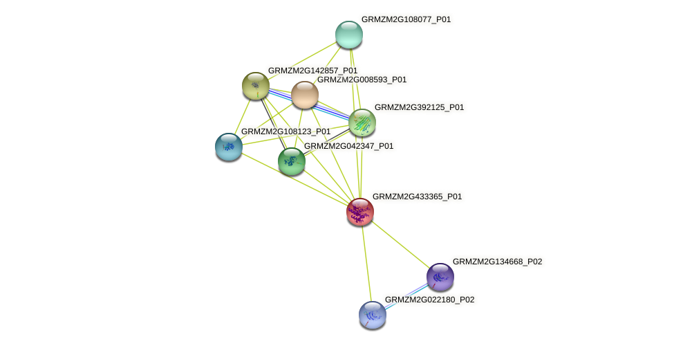 GRMZM2G433365_P01 protein (Zea mays) - STRING interaction network