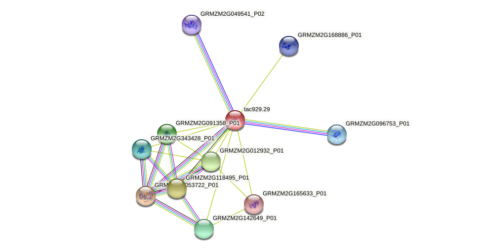 tac929.29 protein (Zea mays) - STRING interaction network