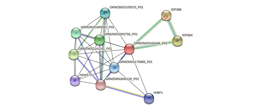 GRMZM2G433446_P01 protein (Zea mays) - STRING interaction network
