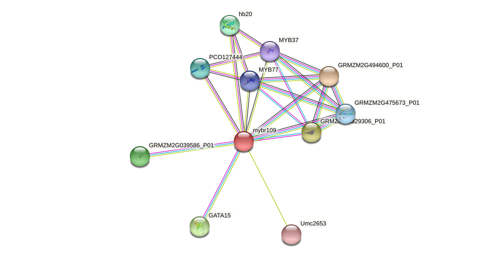 mybr109 protein (Zea mays) - STRING interaction network