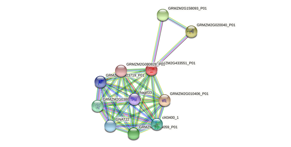 GRMZM2G433551_P01 protein (Zea mays) - STRING interaction network