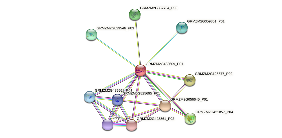 GRMZM2G433609_P01 protein (Zea mays) - STRING interaction network