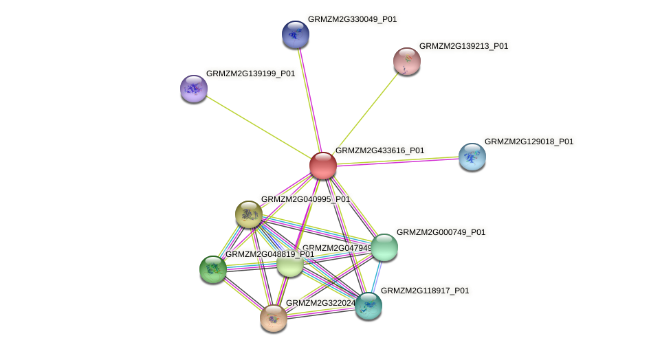 GRMZM2G433616_P01 protein (Zea mays) - STRING interaction network