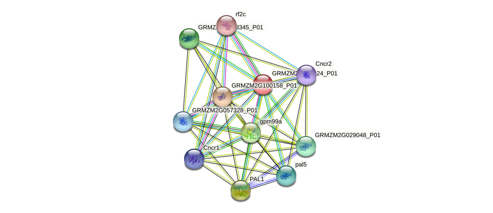Zm.160783 protein (Zea mays) - STRING interaction network