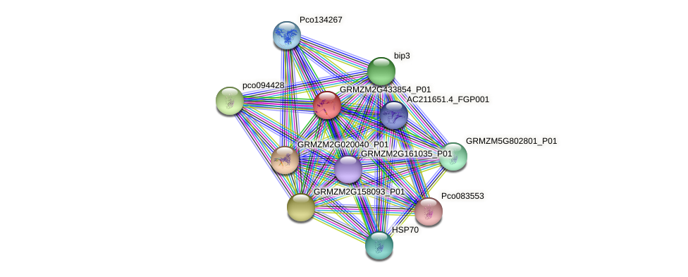 GRMZM2G433854_P01 protein (Zea mays) - STRING interaction network