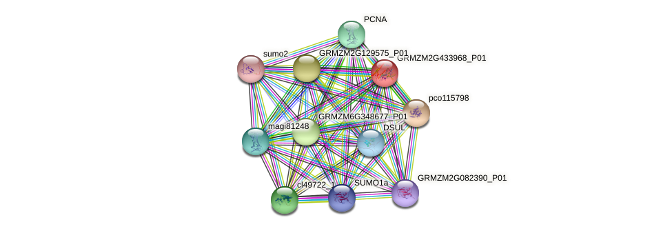 GRMZM2G433968_P01 protein (Zea mays) - STRING interaction network