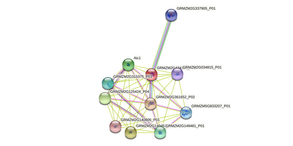 GRMZM2G434388_P01 protein (Zea mays) - STRING interaction network