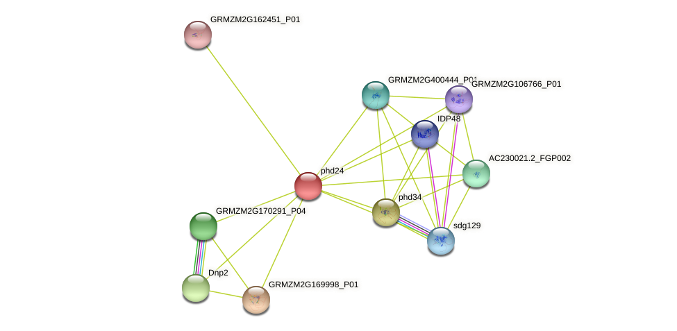phd24 protein (Zea mays) - STRING interaction network