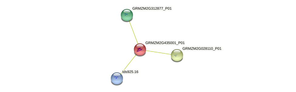 GRMZM2G435001_P01 protein (Zea mays) - STRING interaction network