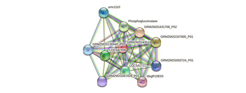 GRMZM2G435244_P01 protein (Zea mays) - STRING interaction network