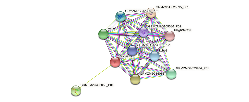 GRMZM2G435294_P01 protein (Zea mays) - STRING interaction network