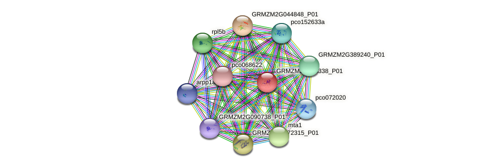 GRMZM2G435338_P01 protein (Zea mays) - STRING interaction network