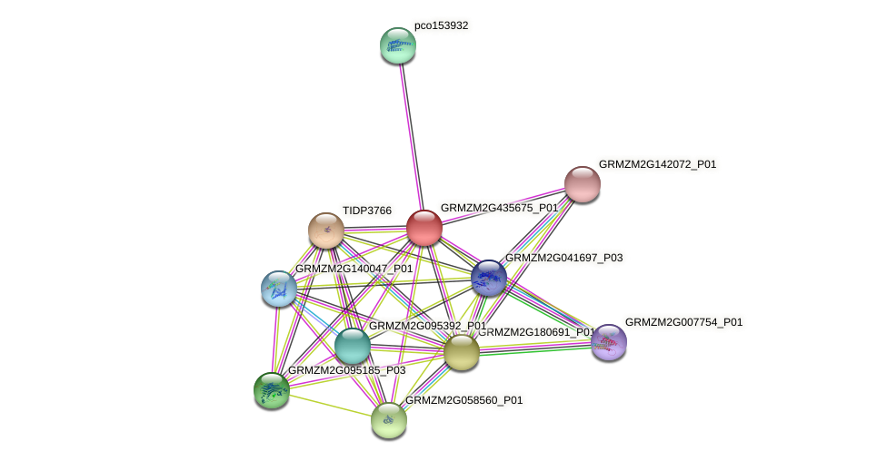 GRMZM2G435675_P01 protein (Zea mays) - STRING interaction network