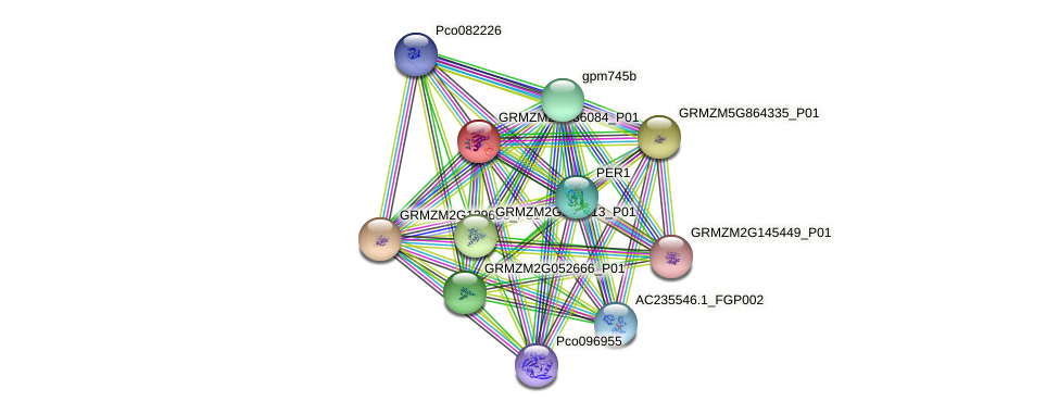 GRMZM2G436084_P01 protein (Zea mays) - STRING interaction network