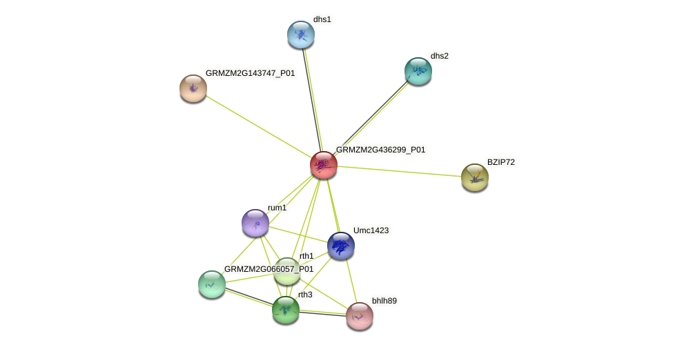 Zm.31978 protein (Zea mays) - STRING interaction network
