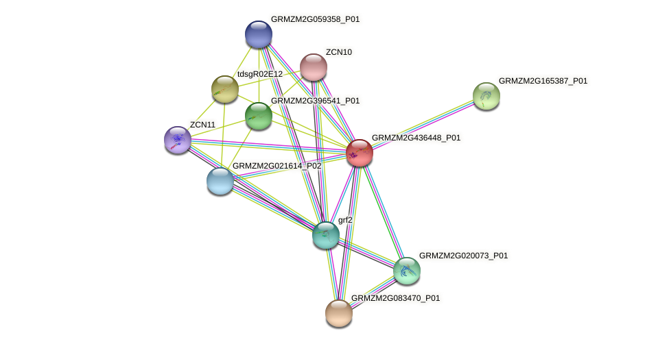 Zm.26040 protein (Zea mays) - STRING interaction network