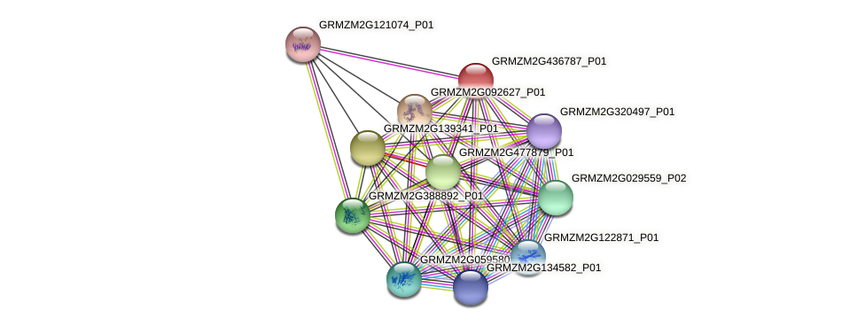 GRMZM2G436787_P01 protein (Zea mays) - STRING interaction network