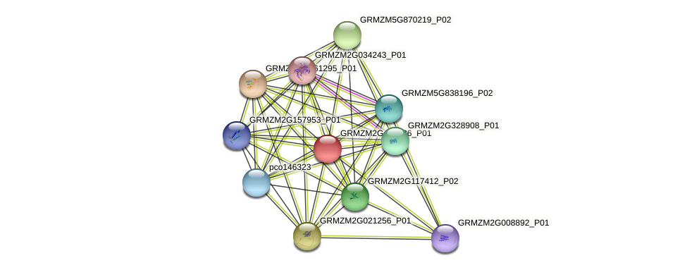 GRMZM2G436986_P01 protein (Zea mays) - STRING interaction network