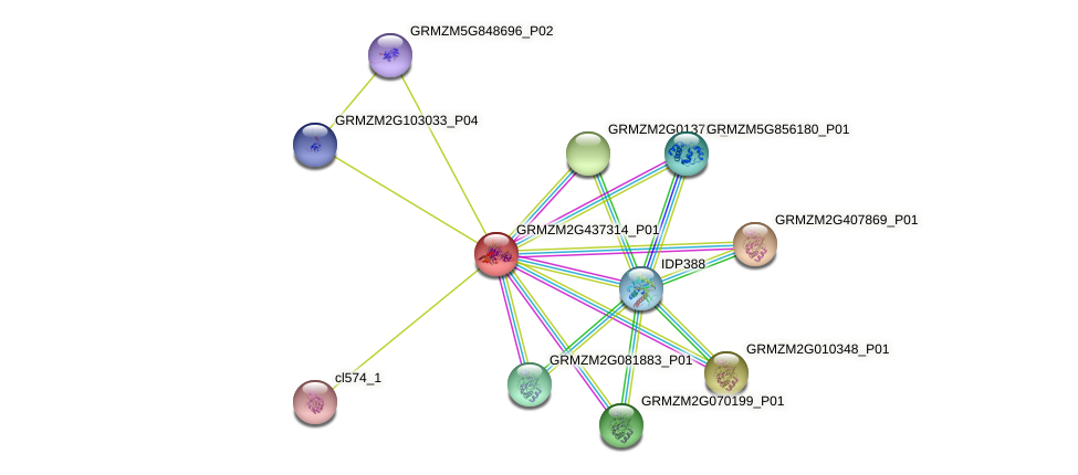GRMZM2G437314_P01 protein (Zea mays) - STRING interaction network