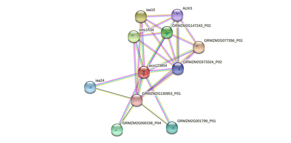 ARF12 protein (Zea mays) - STRING interaction network