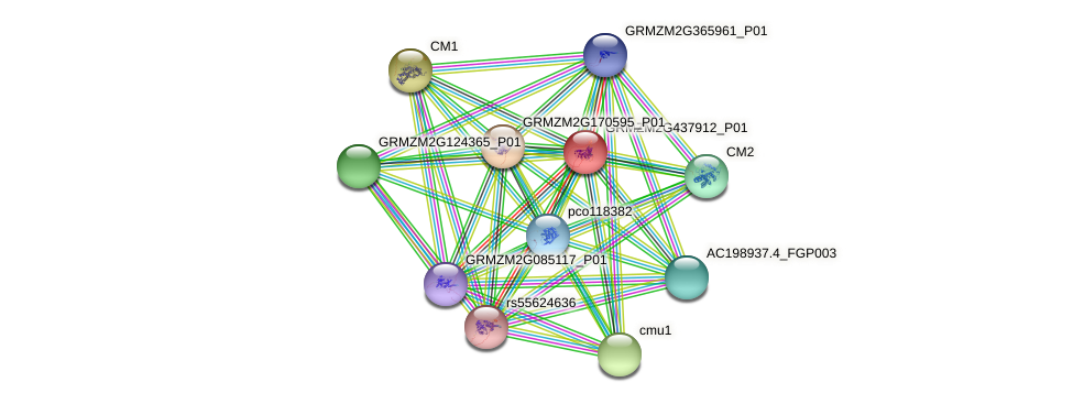 GRMZM2G437912_P01 protein (Zea mays) - STRING interaction network