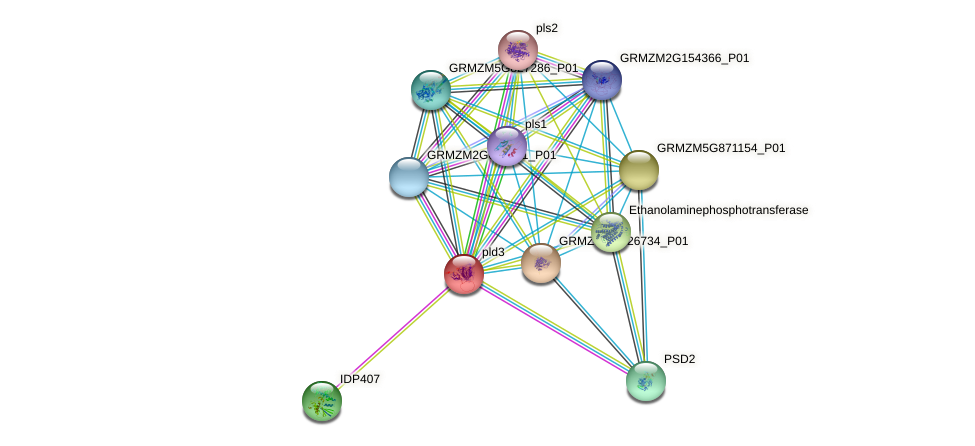 GRMZM2G438378_P01 protein (Zea mays) - STRING interaction network