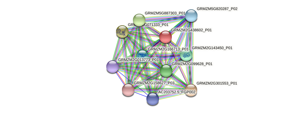 GRMZM2G438602_P01 protein (Zea mays) - STRING interaction network