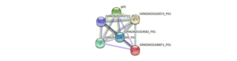 GRMZM2G438871_P01 protein (Zea mays) - STRING interaction network