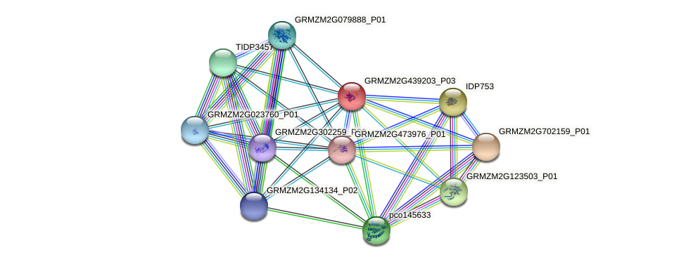 GRMZM2G439203_P03 protein (Zea mays) - STRING interaction network