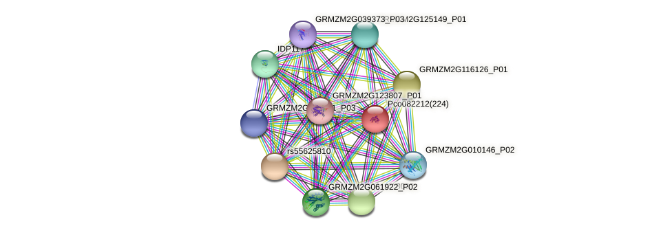 GRMZM2G439457_P02 protein (Zea mays) - STRING interaction network