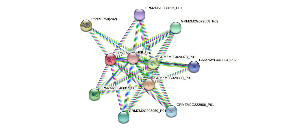 GRMZM2G439988_P01 protein (Zea mays) - STRING interaction network