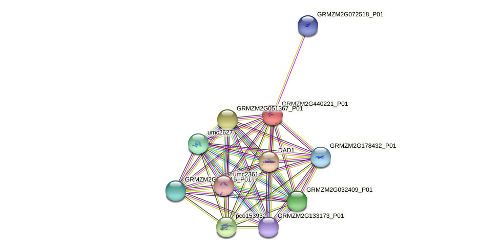 Zm.148736 protein (Zea mays) - STRING interaction network