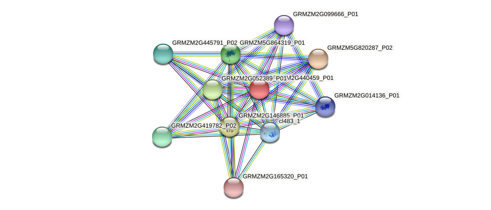 GRMZM2G440459_P01 protein (Zea mays) - STRING interaction network