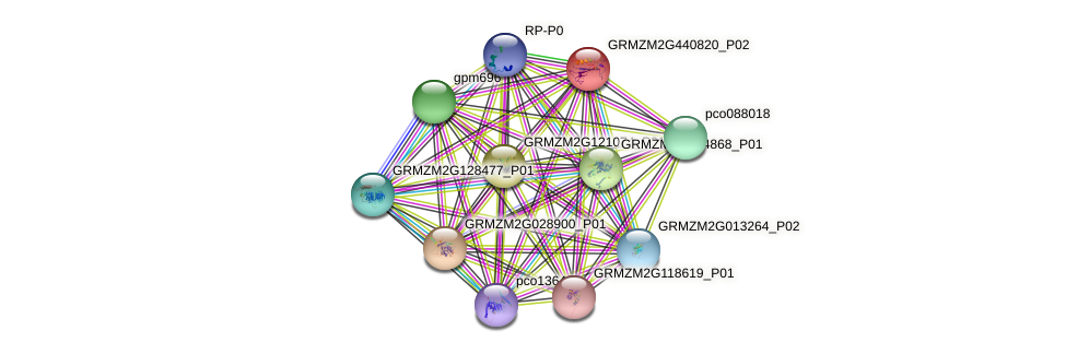 GRMZM2G440820_P02 protein (Zea mays) - STRING interaction network
