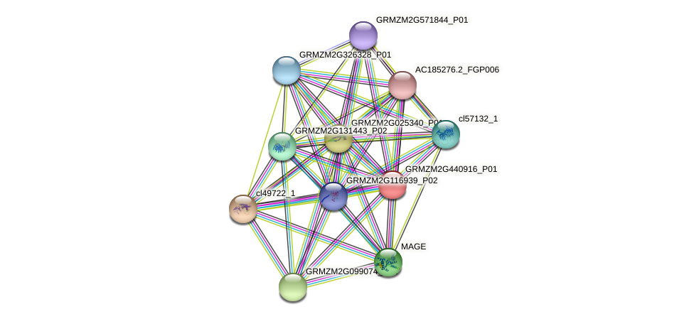 100381612 protein (Zea mays) - STRING interaction network