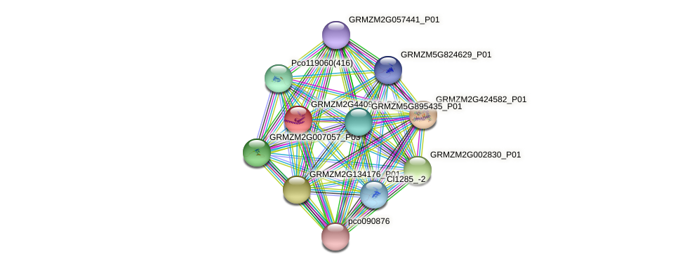GRMZM2G440918_P01 protein (Zea mays) - STRING interaction network