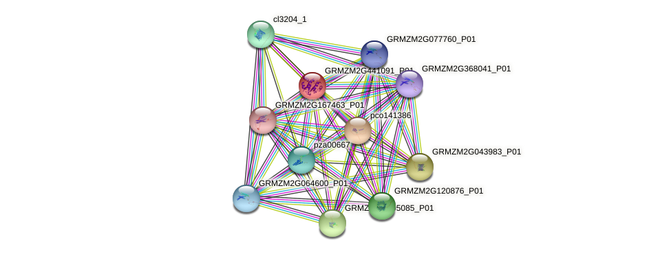 GRMZM2G441091_P01 protein (Zea mays) - STRING interaction network