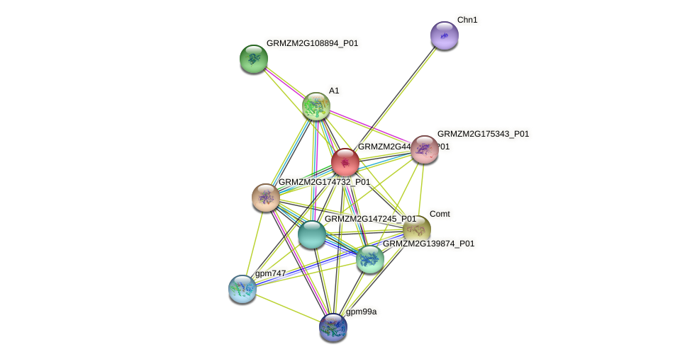 GRMZM2G441347_P01 protein (Zea mays) - STRING interaction network