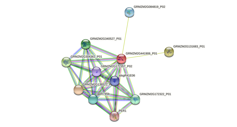 Zm.36234 protein (Zea mays) - STRING interaction network