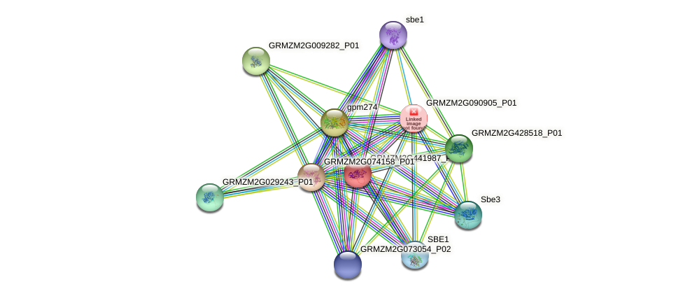 GRMZM2G441987_P01 protein (Zea mays) - STRING interaction network