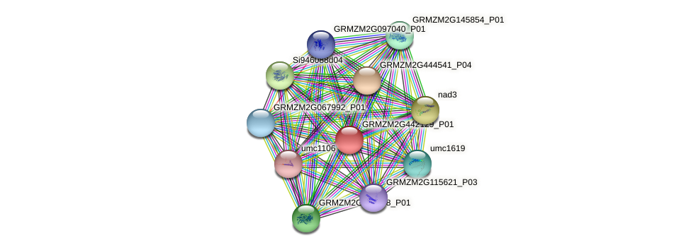 GRMZM2G442129_P01 protein (Zea mays) - STRING interaction network